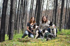 Şili Ormanlarına Yardım Eden Köpekler-11