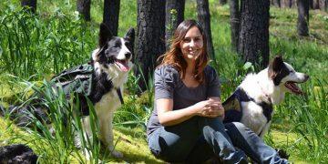 Şili Ormanlarına Yardım Eden Köpekler-3