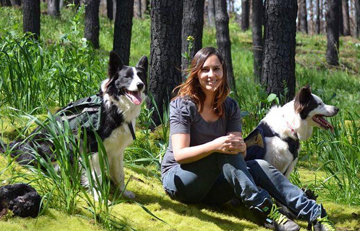 Şili Ormanları Yardım Eden Köpekler