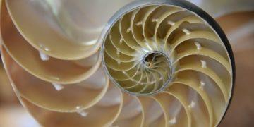 fibonacci-sayıları-nedir
