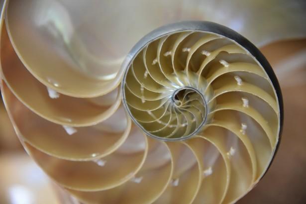 Fibonacci Sayıları – Fibonacci Dizisi Nedir?
