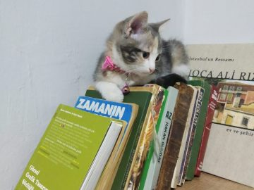 kedili evde çalışmaya çalışmak