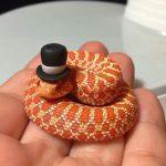 şapkalı turuncu yavru yılan