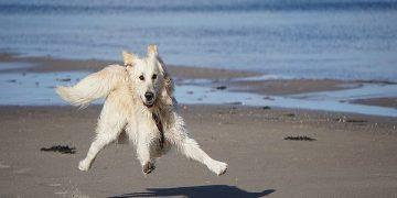 köpeklere egzersiz