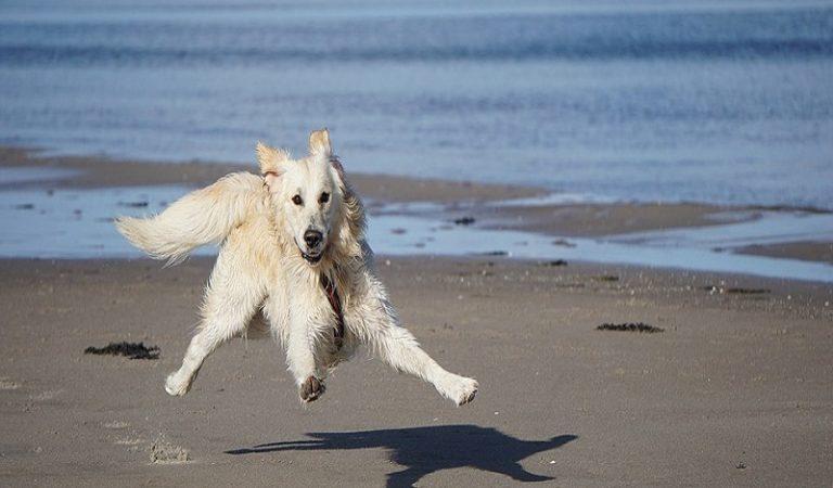 Köpeklere Egzersiz Nasıl Yaptırılır